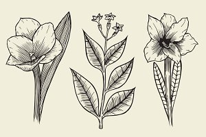 Flower set hand drawn