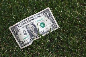 One dollar on green grass