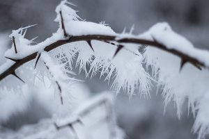 Branch with snow 1