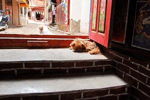 Dog On Doorstep