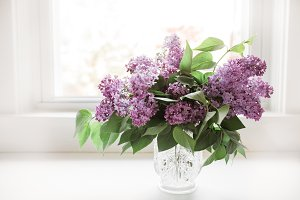 Spring Lilacs in a Vase