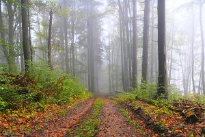 Misty summer forest