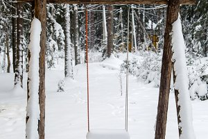 Wooden swing in a pine forest