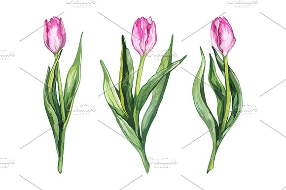 Watercolor Tulip Flower Set Vector