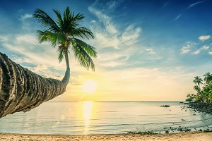 Bright sunset on sandy tropical palm beach, nature background