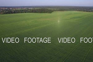 Aerial flight above the agricultural field with green grass, Russia