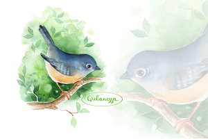 Bird on branch. Watercolor