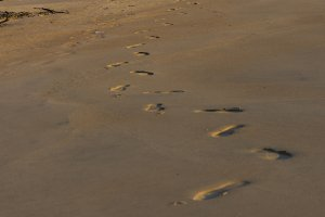 Footprints and maltese.