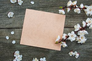 Apricot blossom with card