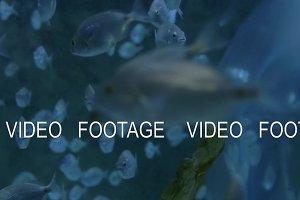 School of fish swimming in big aquarium