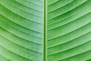 green big leaf as a background