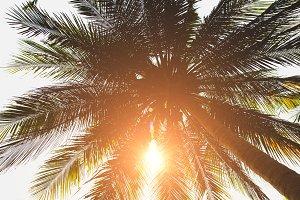 Palm tree with bright sun