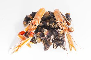 Barnacles and crawfish.