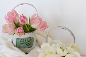 Little white garden tins with tulips