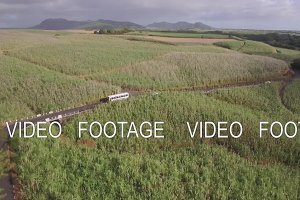 Aerial shot of sugarcane fields in Mauritius