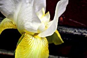 Soft Macro Iris