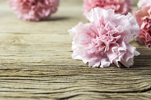 Pink carnation flowers on wood