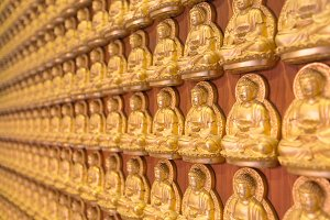 The buddha statue on wall