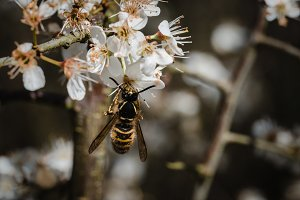 Closeup of Wasp on Plant in Spring