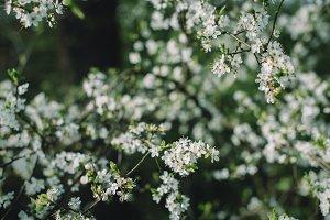Spring Landscape in Warm Colors