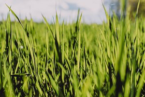 Fresh Grass (perfect Background)