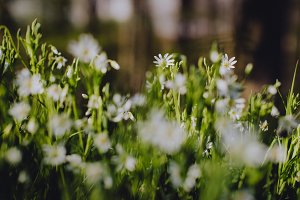 White Flowers on Forest Floor