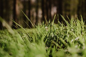 Grass in the Forest (Spring)