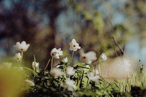 Forest Scene in Spring (Vintage)