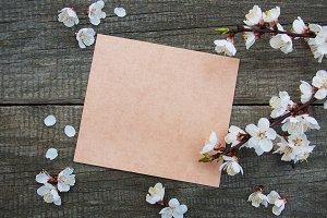 Apricot blossom and card