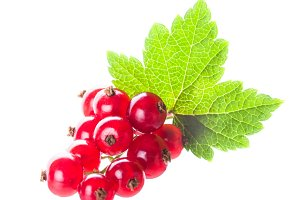 Red currant isolated