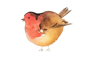 Blue bird hand drawn watercolor aquarelle illustration.