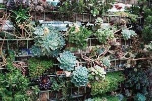 Wall of Cacti/Succulants