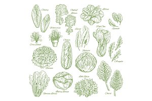Salad leaf and vegetable greens sketch set design