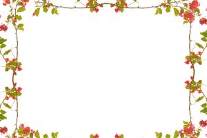 White Frame with Decorated Floral Borders