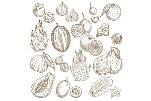 Exotic tropical fruit isolated sketch set design