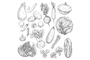 Vegetable and mushroom sketch set for food design