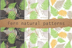 Fern natural patterns vector set