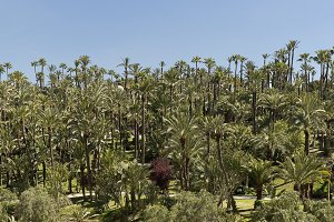 View of the palm grove of Elche