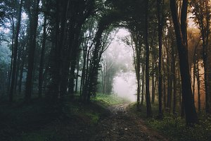 Road through mysterious forest