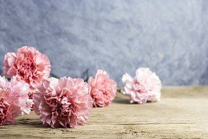 Carnation flower on wood