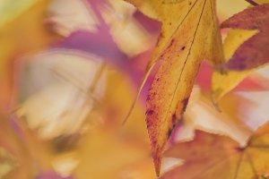 Kaleidoscope colours of autumn