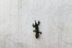 Lizard in the Wall