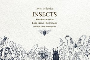 Insects Vector Collection
