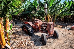 Very old rustic tractor on a banana plantation