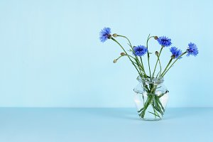 Cornflowers in glass jar