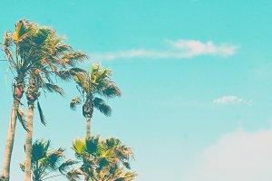 Palm Trees & Blue Skies