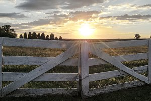 Sunny Fence