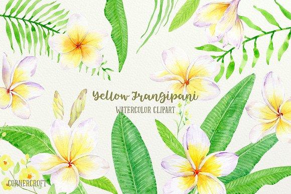 Yellow Frangipani Clip Art Watercolo