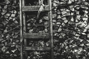 BW view of firewood stock