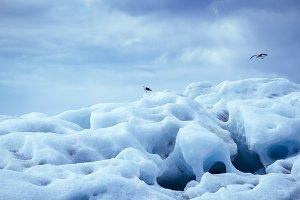 Glacier iceberg with seagulls